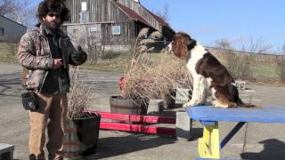 Dog Training Goals For The New Year Part One