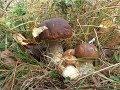 Октябрь грибная волна в разгаре mp3