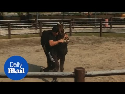 Dave Hill - Man Vs. Bull That is Five Times His Weight