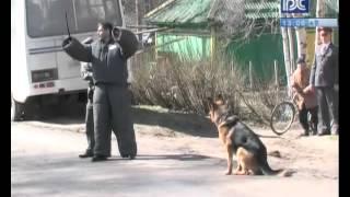 Показательные выступления полиции в Вытегре