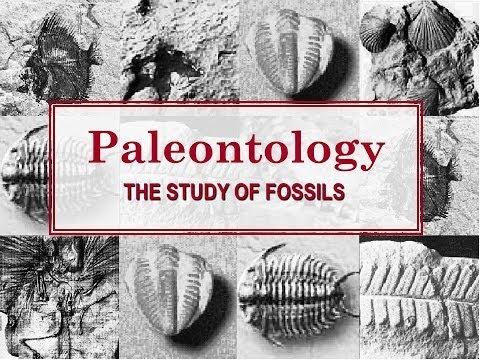 Paleontology - The Study of Fossils