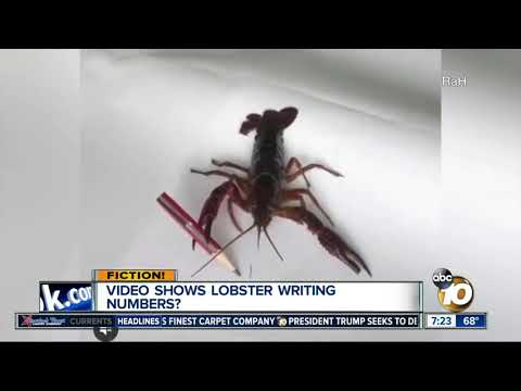 Video Shows Lobster Writing Numbers?