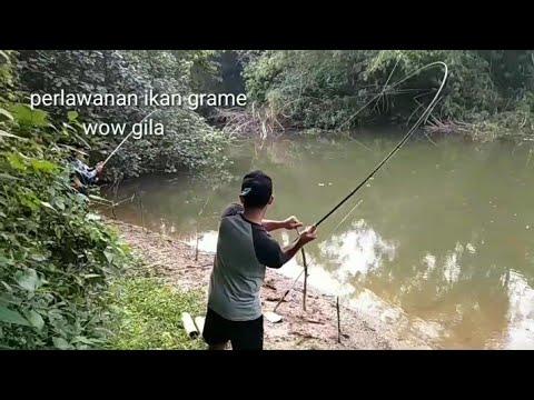 Mancing ikan gurame/kalui ukuran jumbo pake umpan bakwan...