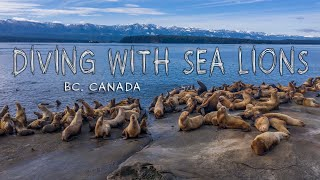 Diving with SEA LIONS (4k)