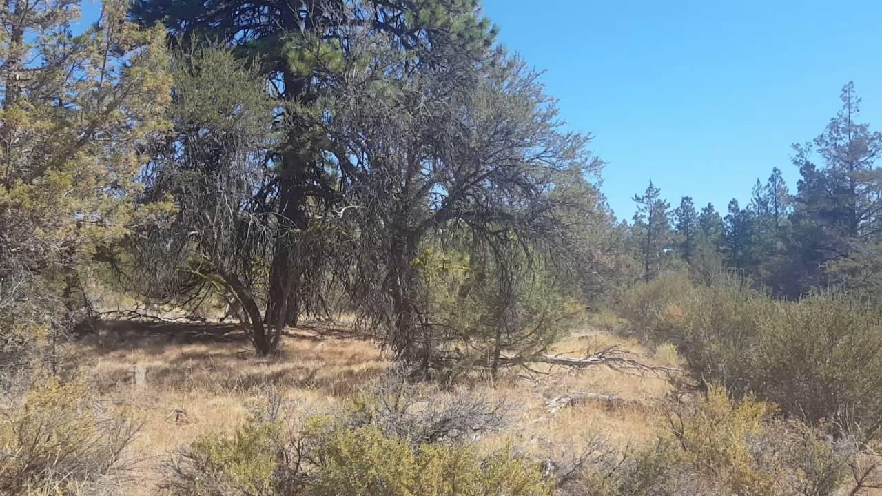Land For sale on Golden Eagle Dr. Klamath Falls