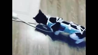 Кошка отходит от наркоза, смотреть всем😅