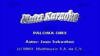 Paloma Gris