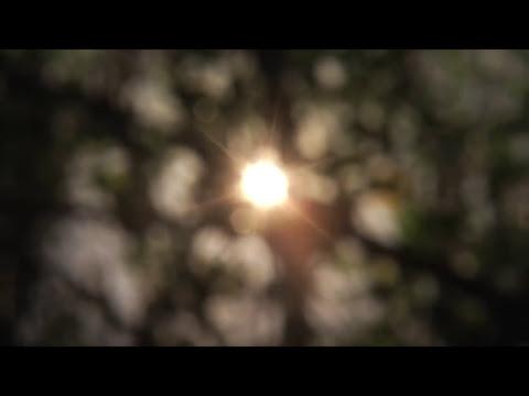 Woods - Til The Sun Rips