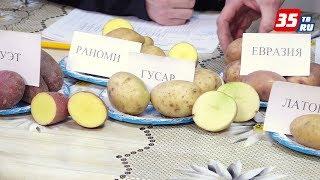 Лучшие сорта картофеля в 2017 году(, 2018-01-16T14:01:31.000Z)