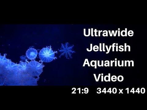 Ultrawide  Jellyfish Aquarium 21:9 Resolution Mac and Windows Screensaver 1440p