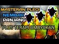 Suara Masteran Pleci Nembak Panjang Variasi  Mp3 - Mp4 Download