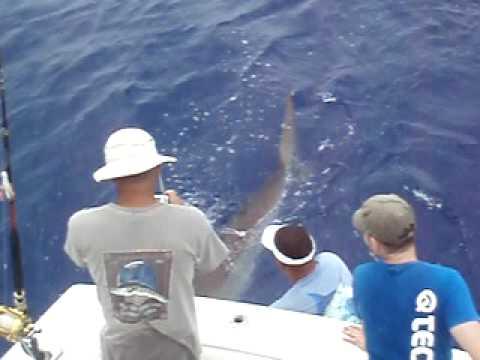 Shark Jamaica 29 Agosto 2009 4/5