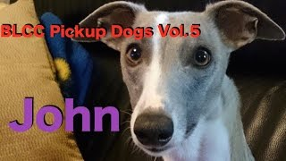 BLCC ルアーコーシング Pickup Dogs Vol 5 ウィペット John ジョン BLCC...