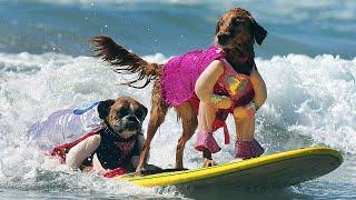 2020 World Dog Surfing Championship  | Noosa Heads Queensland Australia