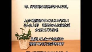 上野樹里と熱愛TRICERATOPS和田唱の母親は.. 母親は有名なあの方! 上...