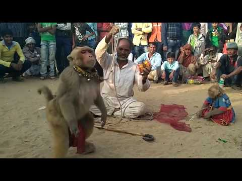 Bandar Bandriya Ka Khel - Funny Video | Comedy Video From My Phone