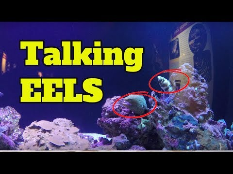 Funny Talking Animals For Kids - Talking Eels (Clean Voice Over)