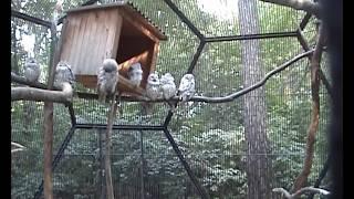 Красивые Животные зоопарка