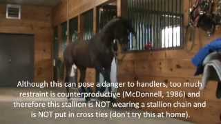 Stallion Behavior -  Redirected Behaviour / Self Mutilation / Aggression in horses