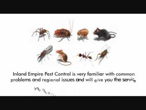 Bed Bug Exterminator Corona, 714-653-1141, rat control, corona, Bedbugs riverside