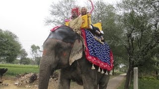 Elephant Ride in Jaipur, India