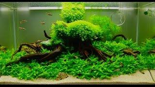 Оформление аквариума! Дизайн небольшого аквариума! Аквариум для начинающих!