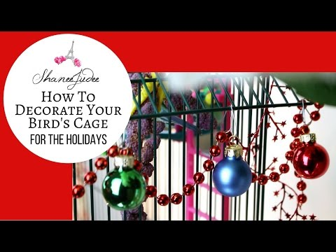 HOW TO DECORATE YOUR BIRD'S CAGE FOR THE HOLIDAYS | SHANEEJUDEE