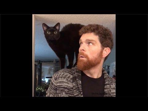 Cat Parents Montage