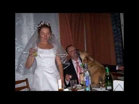 Смешные и прикольные свадебные фотографии ( 81 фото )