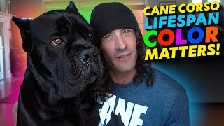 Cane Corso Lifespan COLOR MATTERS!