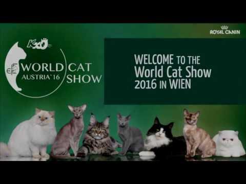 """World Cat Show 2016 """"FIFe"""" - Wien (Austria)"""