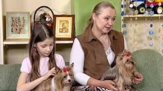 Ольга Дорондова, заводчик йоркширских терьеров(