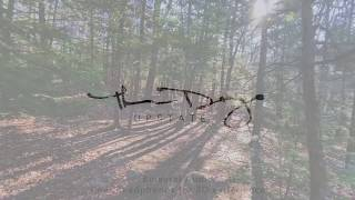 10-Minute Walking Meditation in Binaural Audio: Morning Streams in the Forest