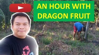 I SPEND AN HΟUR IN THE FARM: CLEANING THE DRAGON FRUIT POST.MUST WATCH!.