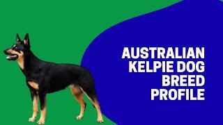 Australian Kelpie Dog Breed Profile