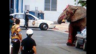 Гавайи запретили цирки с животными после расстрела цирковой слонихи Тайк