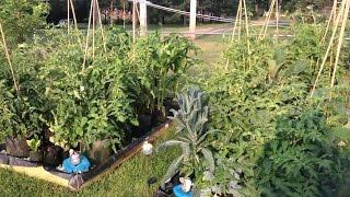 Update! Huge Growth! The Self Watering Grow Bag Garden!