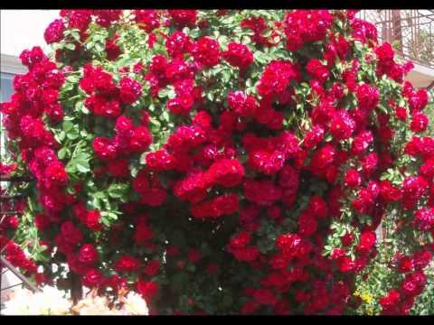 Captain Cook -Saksofony; `` Czerwone jest Wino``,``Niebieskie Curacao`` i inne ...