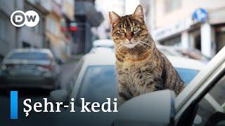 Kediler şehri İstanbul |