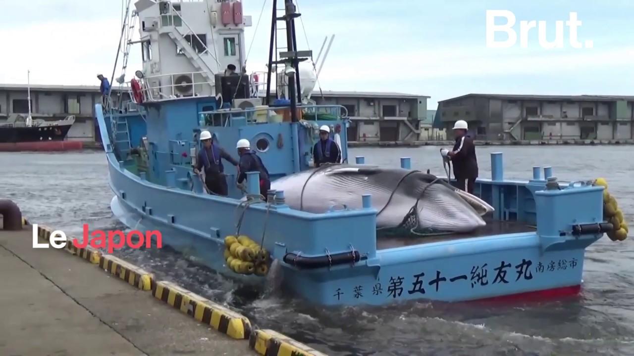 Le Japon n'arrête pas la pêche à la baleine malgré les interdictions