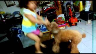 小孩與狗之爭