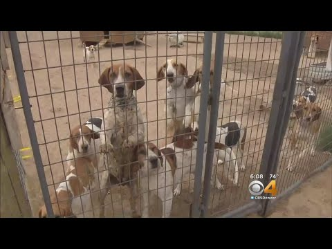 Fox Hound Hunting Club Under Attack By Neighbors