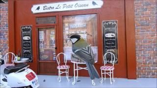 Kim´s Bird Theater 2, Cool Bird Feeder Bistro Café in Paris