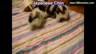 Japanese Chin, Puppies, For, Sale, in, Mobile, County, Alabama, AL, Huntsville, Morgan, Calhoun, Eto