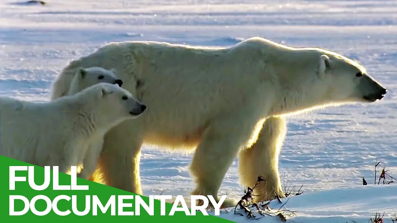 A Trip from Canada to Norway: The wild North | Free Documentary Nature