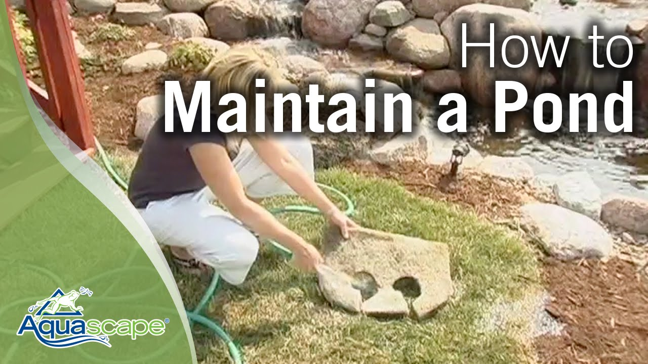 How To Maintain Water Gardens Ponds Water Features Youtube