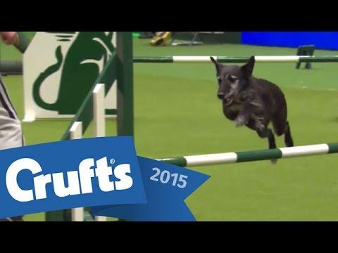Agility - Kennel Club British Open Final | Crufts 2015