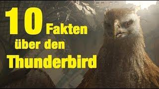 10 FAKTEN über den THUNDERBIRD