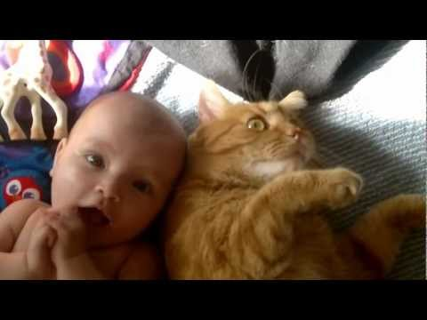 Cat attacks baby – with love