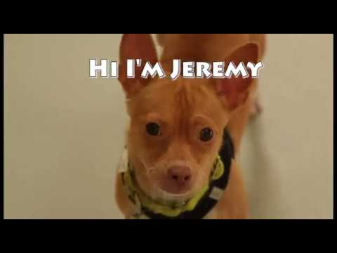 Jeremy-Adopt a Rescue Dog from the Pixie Project!!